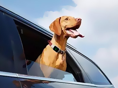 Use Pet GPS Tracker To Keep Your Pet Safe