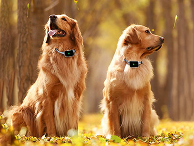How To Protect Your Pets By Mini Global GPS Tracker?