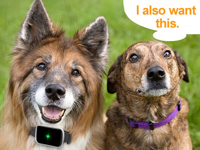 What Is Dog Tracking Device?