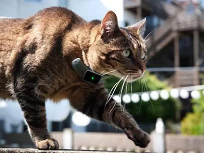 Prepare a CatGPSTracker For Your Kitty