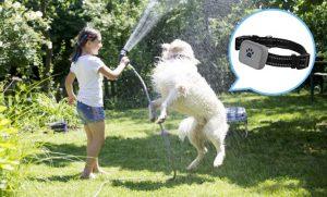 dogtrackingdevice